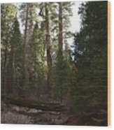 Creek And Giant Sequoias In Kings Canyon California Wood Print