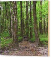 Creek Bed Wood Print