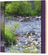 Creek Daisys Wood Print