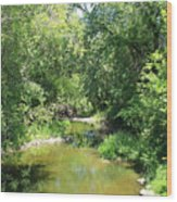 Creek In A Forest Wood Print