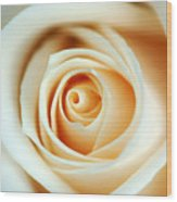 Creme Rose Wood Print