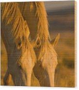 Cremello Sunset Wood Print