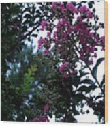 Crepe Mrytle Blossoms Wood Print