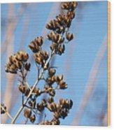 Crepe Myrtle In Blue Wood Print