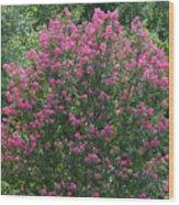 Crepe Myrtle Tree 2 Wood Print