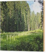 Crescent Meadow In Sequoia Wood Print