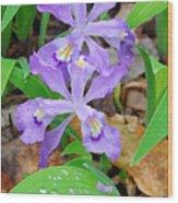 Crested Dwarf Iris Wood Print
