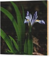 Crested Iris In Lost Valley Wood Print