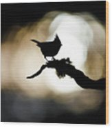Crested Tit Silhouette Wood Print