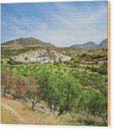 Crete Olive Grove Wood Print