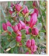 Crimson Azalea Buds Wood Print