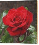 Crimson Bouquet  Wood Print