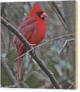 Crimson Cardinal Wood Print