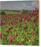 Crimson Clover Patch Wood Print