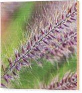 Crimson Fountaingrass Abstract Wood Print
