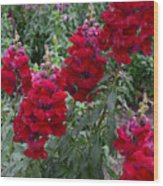 Crimson Snapdragons Wood Print
