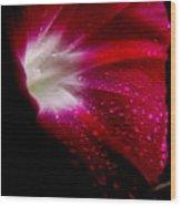 Crimson Wood Print