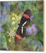 Crimson Longwing Butterfly 8231 Idp_2 Wood Print