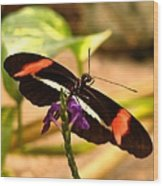 Crimson Patched Longwing 2 Wood Print