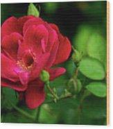 Crimson Red Rose By Kaye Menner Wood Print