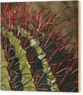Crimson Thorns 2 Wood Print