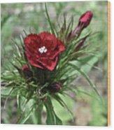 Crimson Velvet  Wood Print
