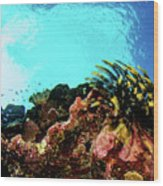 Crinoid Silhouette Wood Print
