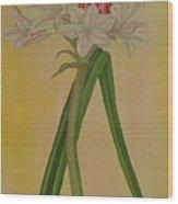 Crinum Bulbispermum  Wood Print