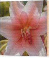Crinum Lilies Wood Print