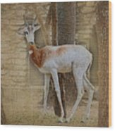 Critically Endangered Dama Gazelle Wood Print