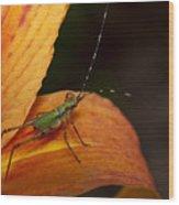 Critter-1 Wood Print