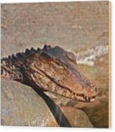Croc Wood Print
