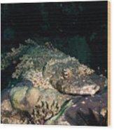 Crocodile Fish On Coral Wood Print