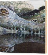 Crocodile X2 Wood Print
