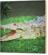 Crocodylus Acutus Wood Print