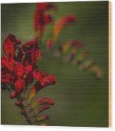 Crocosmia No. 1 Wood Print