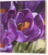 Crocus And Bee Wood Print