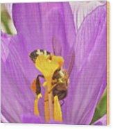 Crocus And The Bee Wood Print