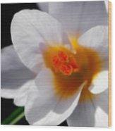 Crocus Blossom Wood Print