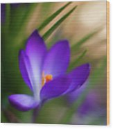 Crocus Light Wood Print