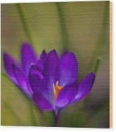 Crocus Petals Wood Print