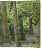Crooked Little Path Wood Print