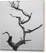 Crooked Tree Wood Print by Matt Hanson