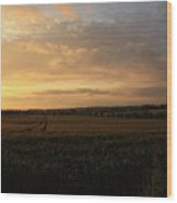 Crops At Sunset Wood Print
