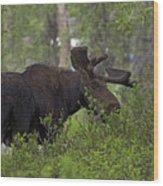 Cross Moose Wood Print