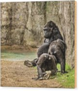 Cross River Pregnant Gorilla And Children Wood Print