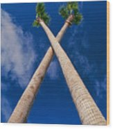 Crossed Palm Trees Wood Print