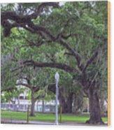 Crossing Trees Wood Print