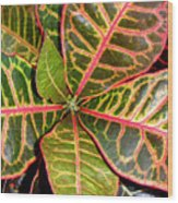 Croton - A Center View Wood Print