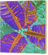 Croton - Blue Wood Print